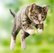 00jumping-cat